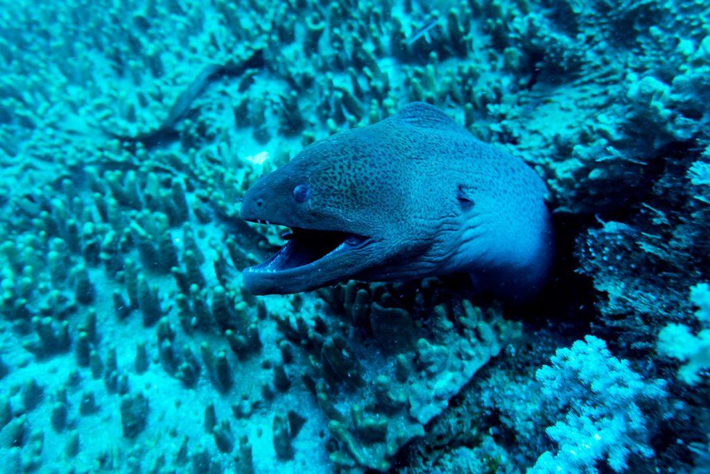 diving in the Indian ocean