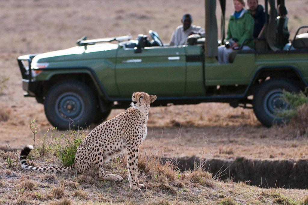 filming cheetahs in Kenya