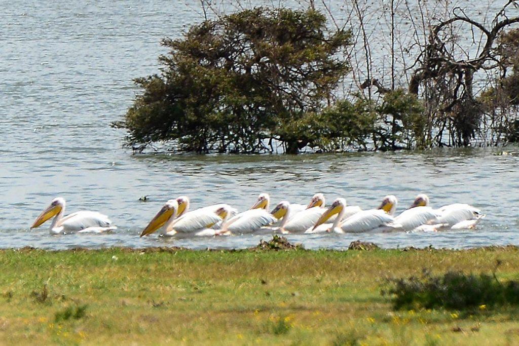 filming flamingos at lake nakuru