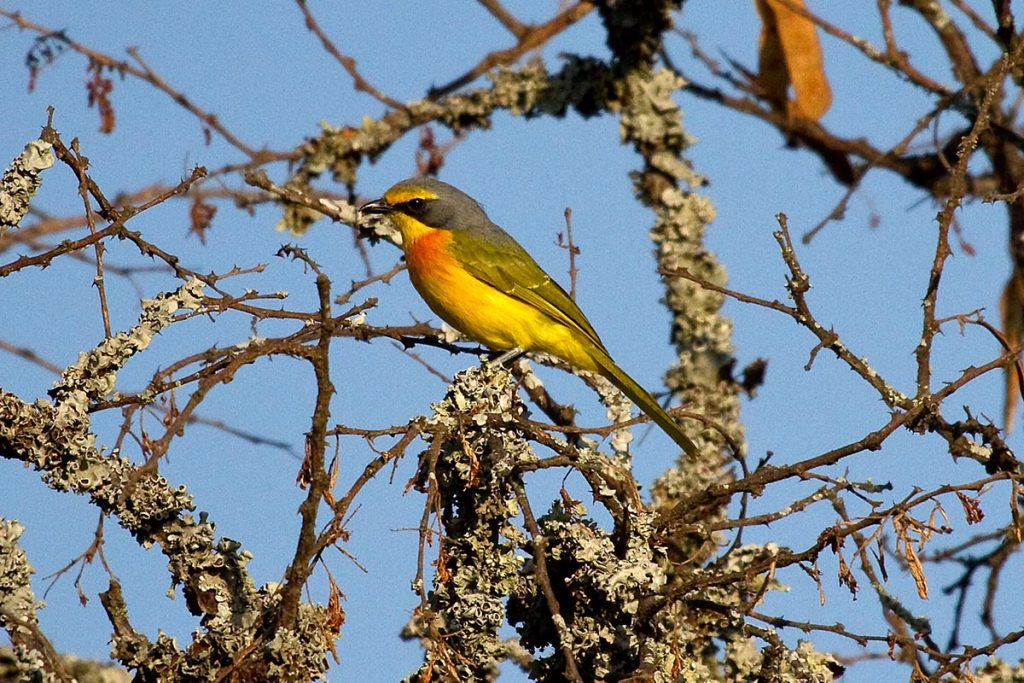 birds in Rwanda