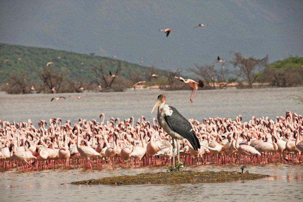 birds at Lake Bogoria